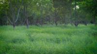 Bomen en gras in het park
