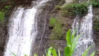 Two Little Waterfalls With Aquatic Plants
