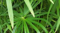 Spiral wachsende Pflanzen, die durch den Wind bewegt werden