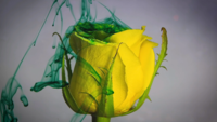 Yellow Rose And Green Ink