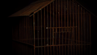 Rusty_birdcage_with_scary_light_moving_1668