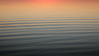 Calm rolling waves reflecting the sunset