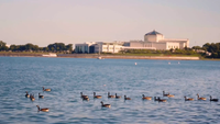 Geese Swimming In Monroe Harbor With Shedd Aquarium In Background