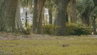 Ekorrar söker efter mat i Forsyth Park Savannah Georgia