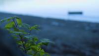 Clip de mano de la pequeña planta y el lago en el fondo