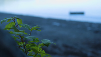 Handheld Clip Van Little Plant En Lake In Achtergrond