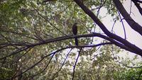 liten fågel i zoo