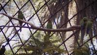 Macaws vilar på trädgren i Zoo Habitat