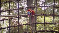 Macaws In Zoo Habitat Slow Motion