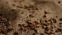 Rotating shot of barley and other beer brewing ingredients - BEER BREWING 242