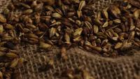 Tiro giratorio de cebada y otros ingredientes de elaboración de cerveza - TRATAMIENTO DE CERVEZA 234