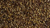 Rotating shot of barley and other beer brewing ingredients - BEER BREWING 094