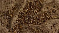 Plan tournant de l'orge et d'autres ingrédients brassicoles - Bière Brewing 230