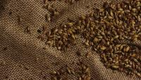 Roterend schot van gerst en andere ingrediënten voor het brouwen van bier - BIEREN 221