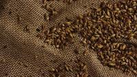 Tiro giratorio de cebada y otros ingredientes de elaboración de cerveza - BEER BEING 221