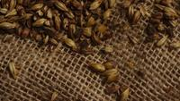 Rotating shot of barley and other beer brewing ingredients - BEER BREWING 225