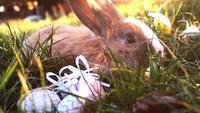 Conejito de Pascua blanco con huevos de Pascua sentado en la hierba