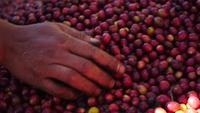 Cámara lenta de los granos de café crudos caen al suelo.