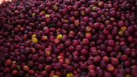 Långsam rörelse av råa kaffebönor faller till marken.