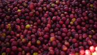 Le mouvement lent des grains de café crus tombe sur le sol.
