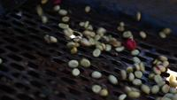 Proceso húmedo con granos de café recién maduros de cafetos.