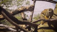 Little-monkey-in-zoo-habitat-2386