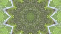 Kaleidoscope Succulent Plant