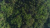 Aerial view forest in the mountain