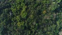 Aerial view rain forest in the mountain