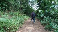 Junger Mann, der im tropischen Dschungel mit Rucksack wandert