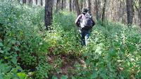Junger Mann, der im tropischen Dschungel mit Rucksack wandert.