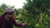 De eigenaar van een sinaasappeltuin is blij met zijn fruitbomen