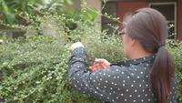 Asiatisk kvinna Kvinna trädgårdsmästare klippa häck.