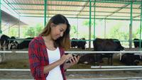 Beautiful asian woman or farmer using mobile phone or smartphone app with and cows in cowshed on dairy farm-Farming.