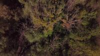 Drone flying above trees in 4K