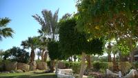 Landscape gardening with blooming flowers in Egypt. Beautiful garden of tropical plants and trees