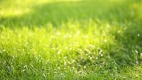 Beautiful low field grass, long macro defocused shot, green plant blowing on the wind with depth of field, spring meadow, with the sun shining.