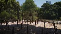 Palm e cactos no jardim botânico