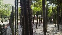 Närbild av kaktusväxter i botanisk trädgård