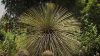 Palma do deserto no jardim botânico