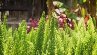 Close Up Of Little Green Plants In Botanical Garden
