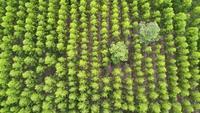 Vista aérea de la selva tropical en Tailandia.