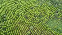 Vista aérea da floresta tropical na Tailândia.