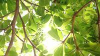 Die Sonnenstrahlen weichen durch die grünen Blätter der Bäume.