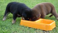 Perrito lindo bebiendo leche en plato de mascotas