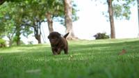 Welpe, der im Park spielt