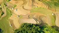 Aerial clip of rice terraces in Vietnam