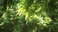 O vento balança os galhos das árvores.