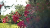 Flores vermelhas em um parque de verão