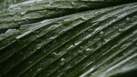 Rain falling on a green leaf
